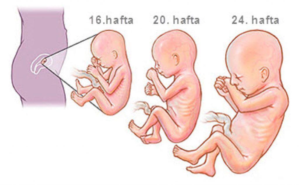 Anne Karnında Bebek Gelişimi 16 Hafta Sonrası