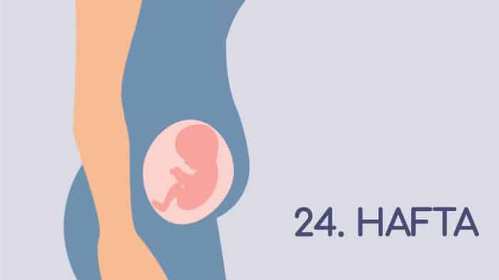24 Haftalık Gebelik Rehberi
