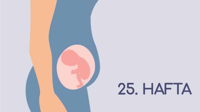 25 Haftalık Gebelik Rehberi