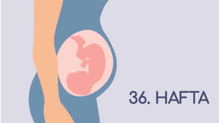 36 Haftalık Gebelik Rehberi