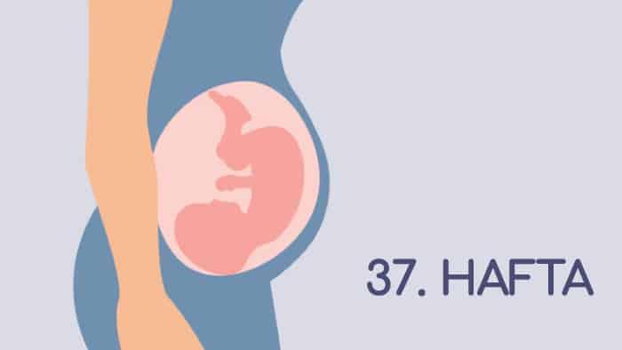 37 Haftalık Gebelik Rehberi